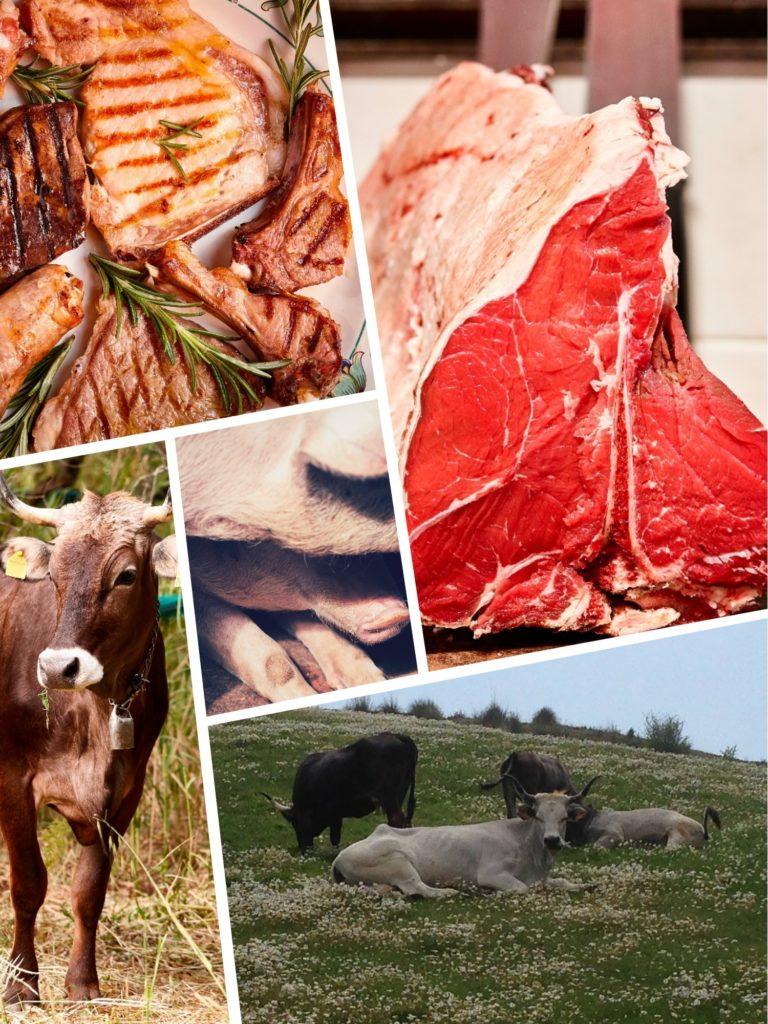 High-quality Italian meat – organic farm